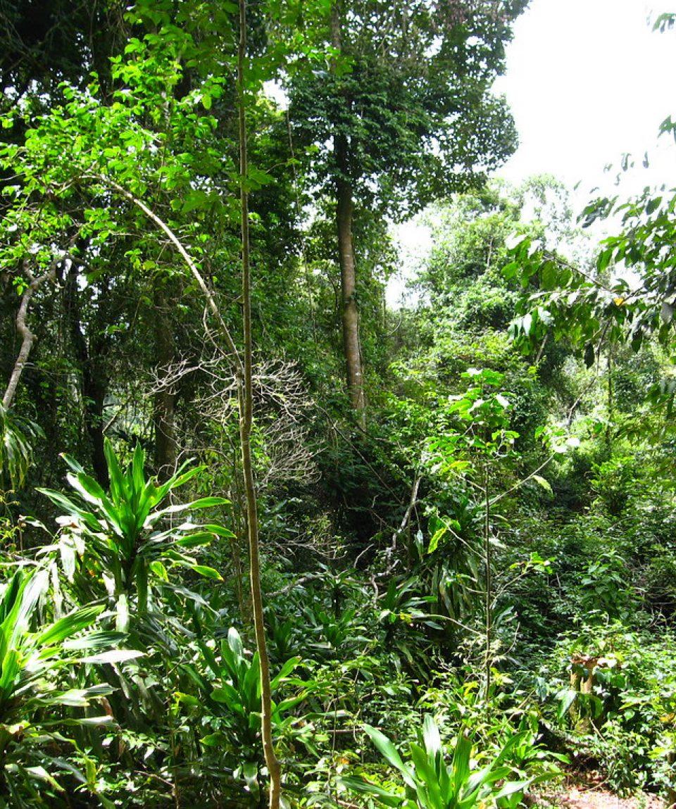 LUSHOTO- MAGAMBA RAIN FOREST 1