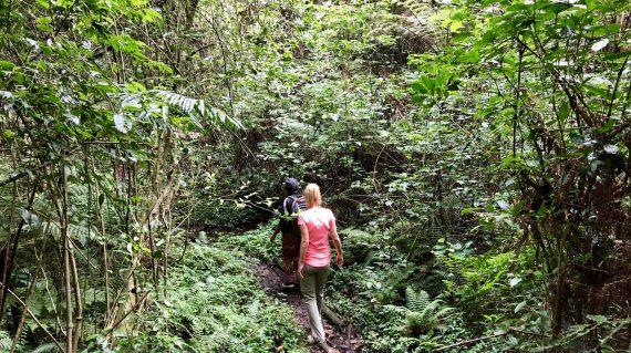 LUSHOTO- MAGAMBA RAIN FOREST 4