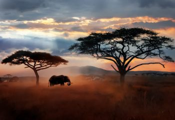 Elephant_in_Serengeti_Nationalpark_in_Tansania